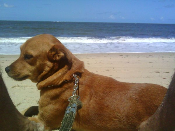 Cão Juma SmartP praia 1