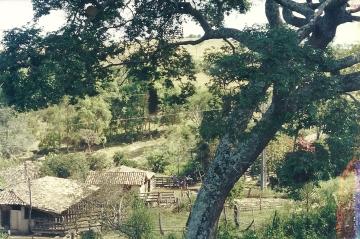 Sede da Lajinha, com pau de óleo onde crianças brincavam de balanço na década de 1950.